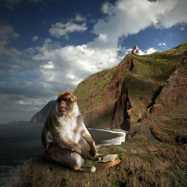 Cum ar trai animalele daca lumea ar fi a lor - Poza 14
