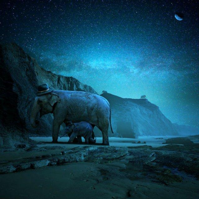 Cum ar trai animalele daca lumea ar fi a lor - Poza 2
