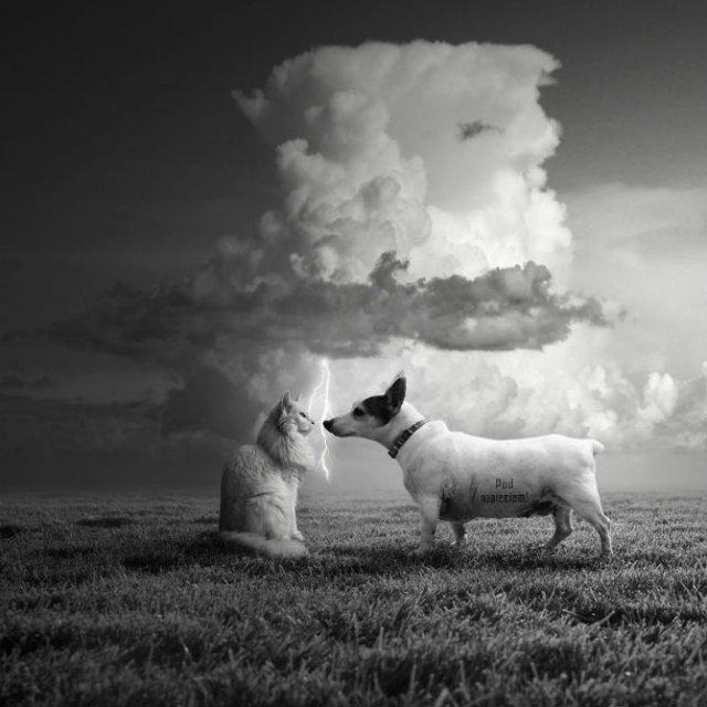 Cum ar trai animalele daca lumea ar fi a lor - Poza 5