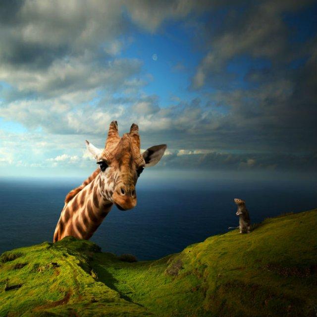 Cum ar trai animalele daca lumea ar fi a lor - Poza 6
