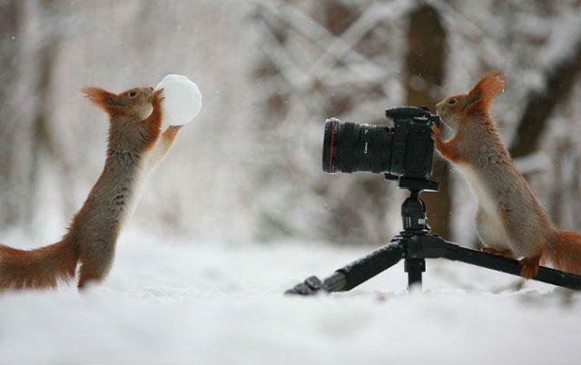 Doua veverite zurlii si omul de zapada - Poza 1