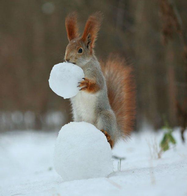 Doua veverite zurlii si omul de zapada - Poza 10
