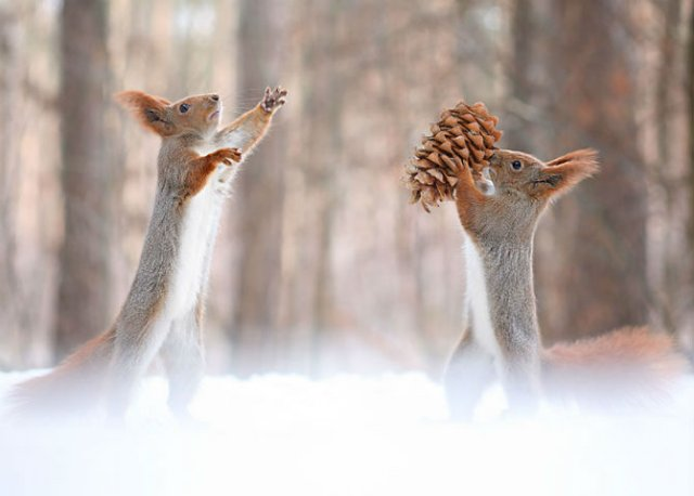 Doua veverite zurlii si omul de zapada - Poza 11