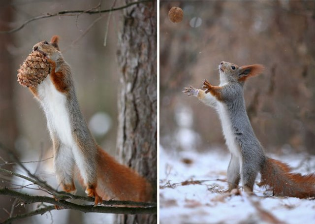Doua veverite zurlii si omul de zapada - Poza 12