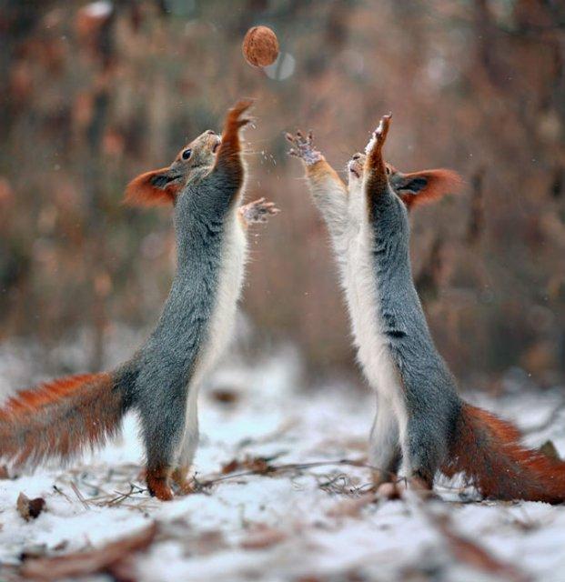 Doua veverite zurlii si omul de zapada - Poza 13