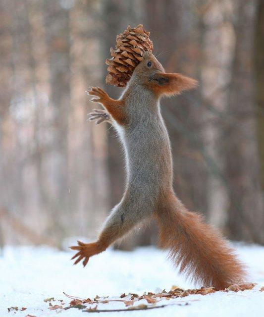 Doua veverite zurlii si omul de zapada - Poza 14