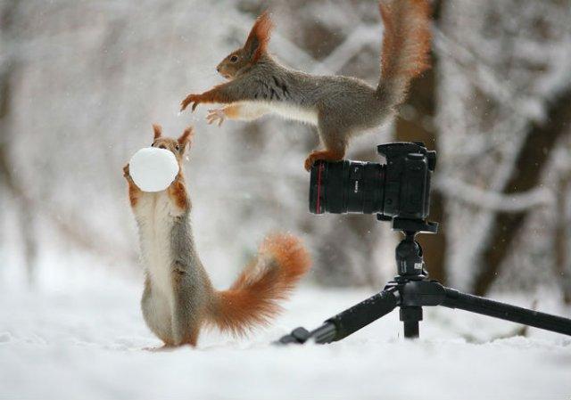 Doua veverite zurlii si omul de zapada - Poza 2