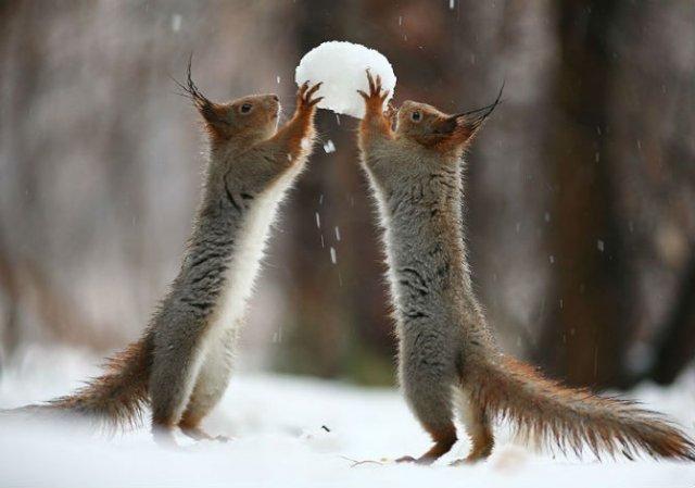 Doua veverite zurlii si omul de zapada - Poza 3