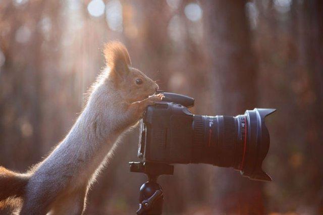 Doua veverite zurlii si omul de zapada - Poza 4