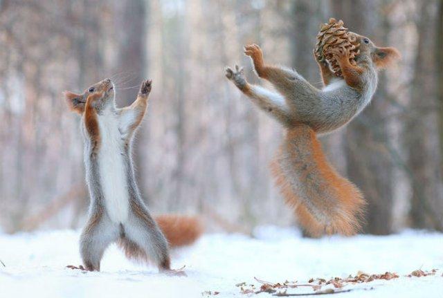 Doua veverite zurlii si omul de zapada - Poza 5