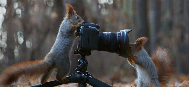 Doua veverite zurlii si omul de zapada - Poza 7