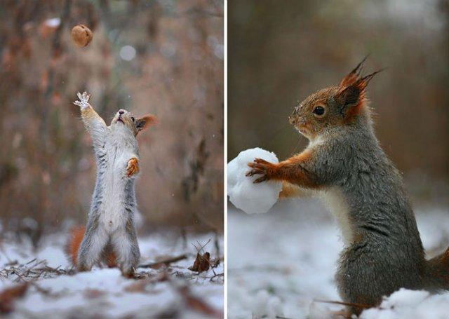 Doua veverite zurlii si omul de zapada - Poza 8