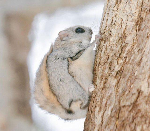 Cele mai dragalase mamifere din lume