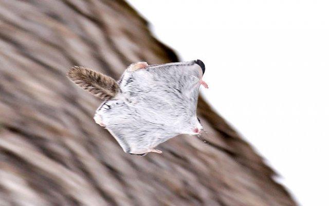 Cele mai dragalase mamifere din lume - Poza 8