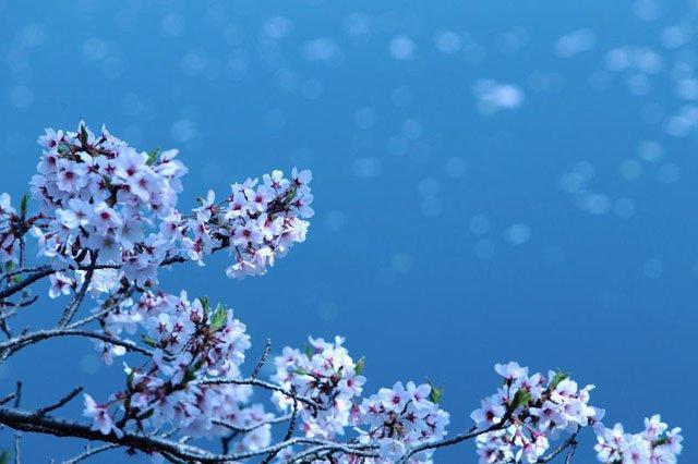 30 de poze cu flori minunate - Poza 30