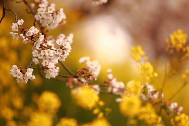 30 de poze cu flori minunate - Poza 29
