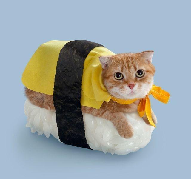 20+ Pisici costumate de Halloween, in poze hilare - Poza 2