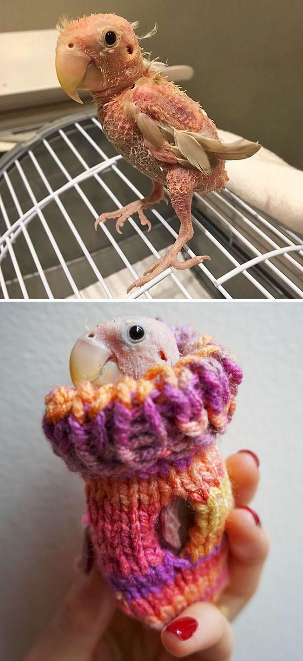 Animalute dragalase pregatite pentru iarna - Poza 12