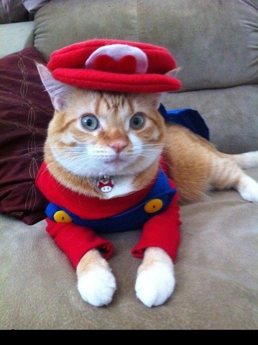 20+ Pisici costumate de Halloween, in poze hilare - Poza 13