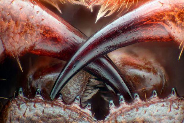Lumea insesizabila cu ochiul liber, in fotografii macro - Poza 13