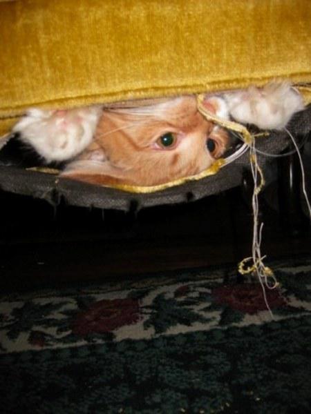 Pisici poznase ascunse in fel de fel de locuri - Poza 4
