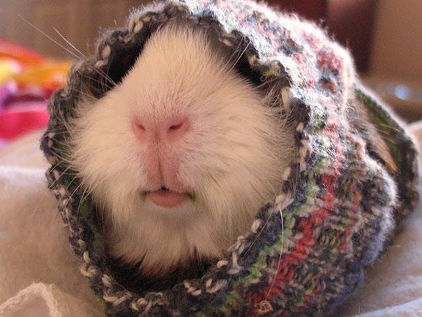 Animalute dragalase pregatite pentru iarna - Poza 14