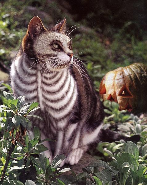 20+ Pisici costumate de Halloween, in poze hilare - Poza 17