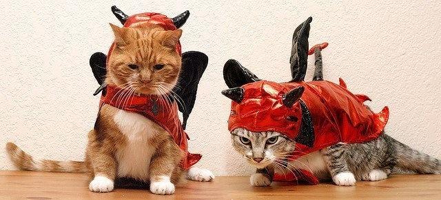 20+ Pisici costumate de Halloween, in poze hilare - Poza 18