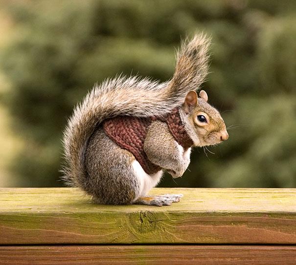 Animalute dragalase pregatite pentru iarna - Poza 18