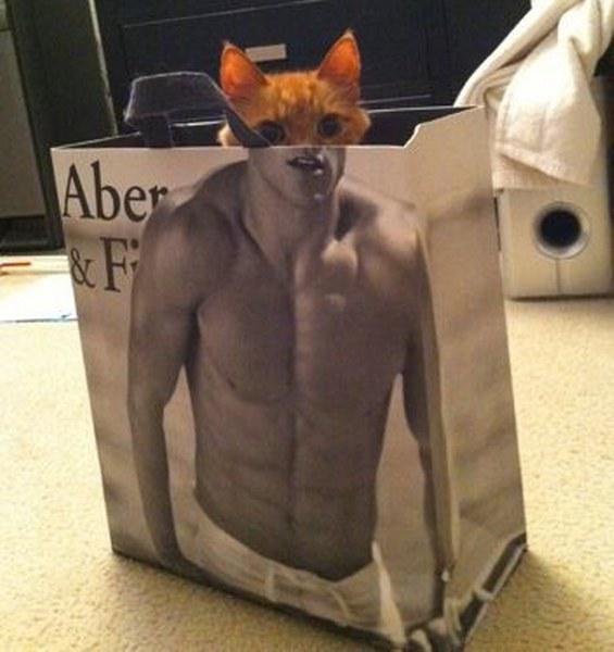 Pisici poznase ascunse in fel de fel de locuri - Poza 10