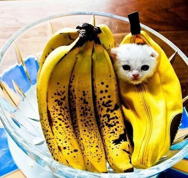 20+ Pisici costumate de Halloween, in poze hilare - Poza 20