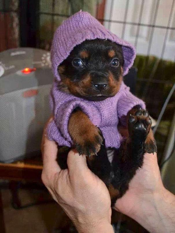 Animalute dragalase pregatite pentru iarna - Poza 20