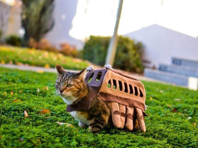 20+ Pisici costumate de Halloween, in poze hilare - Poza 21