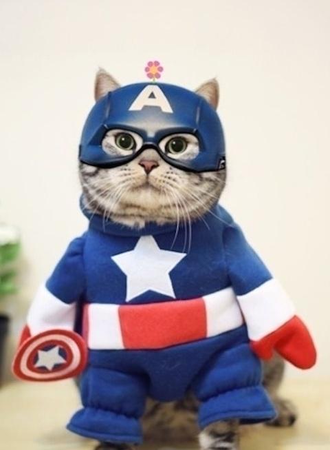20+ Pisici costumate de Halloween, in poze hilare - Poza 22