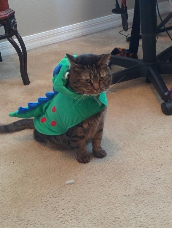 20+ Pisici costumate de Halloween, in poze hilare - Poza 1