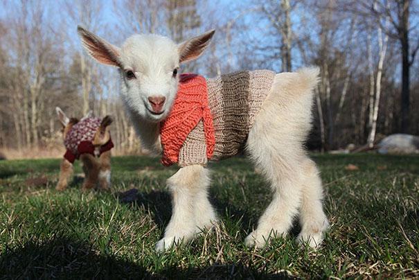 Animalute dragalase pregatite pentru iarna - Poza 3