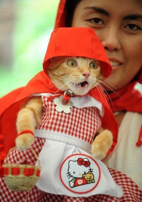 20+ Pisici costumate de Halloween, in poze hilare - Poza 4