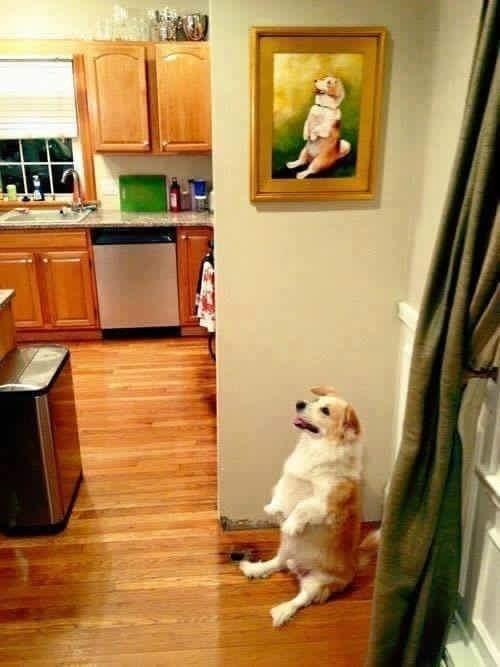 Fotografii amuzante facute la momentul potrivit - Poza 3