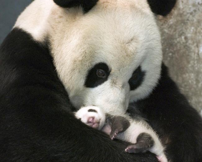 Pui simpatici de animale, in poze adorabile - Poza 2