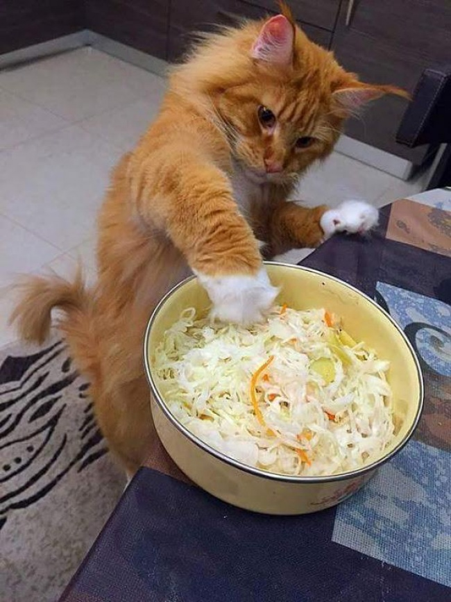 Pisici magnifice, in poze adorabile - Poza 3