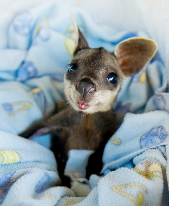 Pui simpatici de animale, in poze adorabile - Poza 3