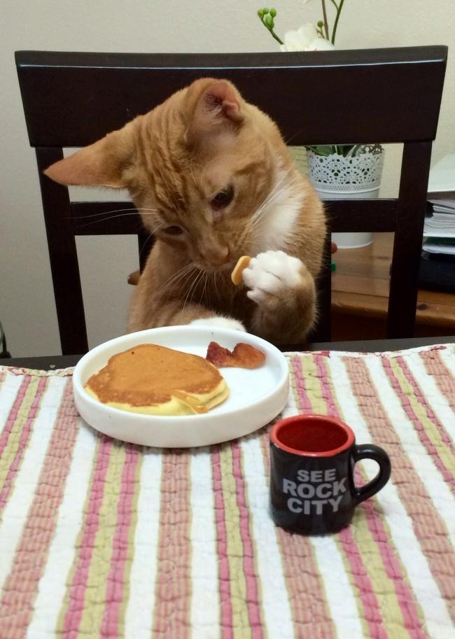 Pisici magnifice, in poze adorabile - Poza 4