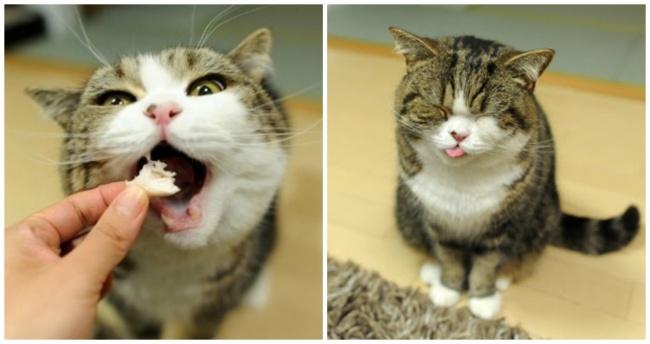 Pisici magnifice, in poze adorabile - Poza 5