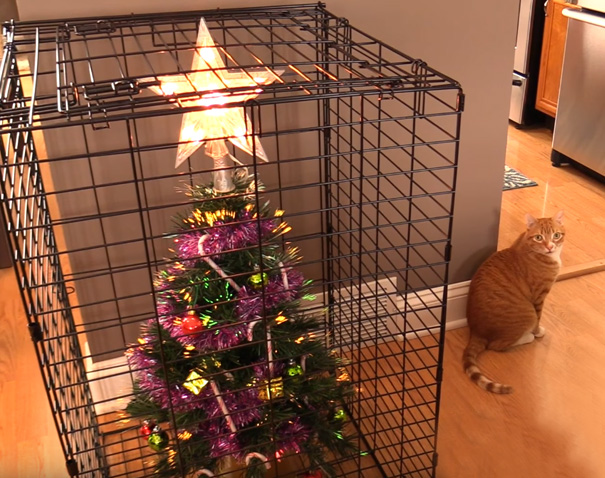 Ingeniozitate dusa la extrem: Cum protejati brazii de caini si pisici - Poza 6