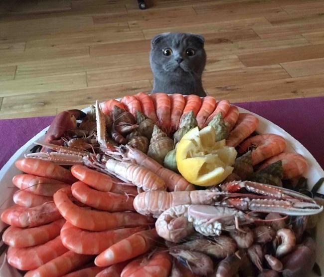 Pisici magnifice, in poze adorabile - Poza 6