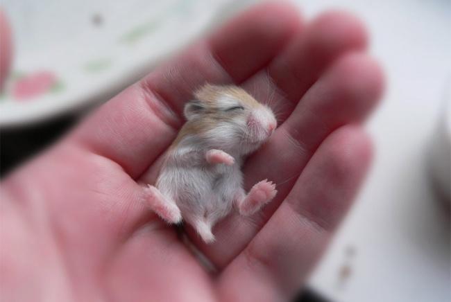 Pui simpatici de animale, in poze adorabile - Poza 7