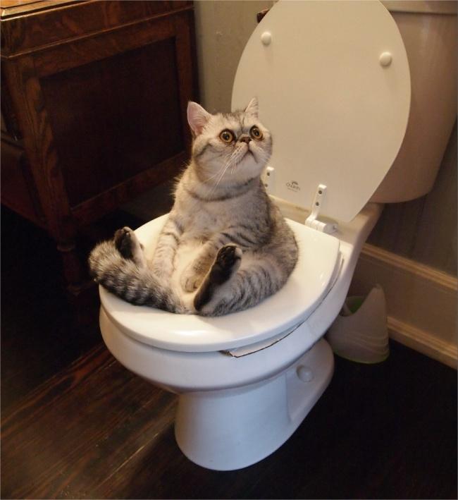 Pisici magnifice, in poze adorabile - Poza 8