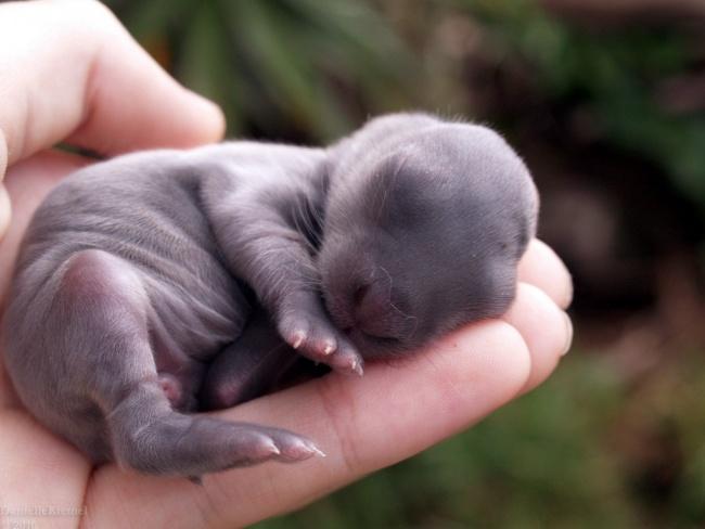 Pui simpatici de animale, in poze adorabile - Poza 8