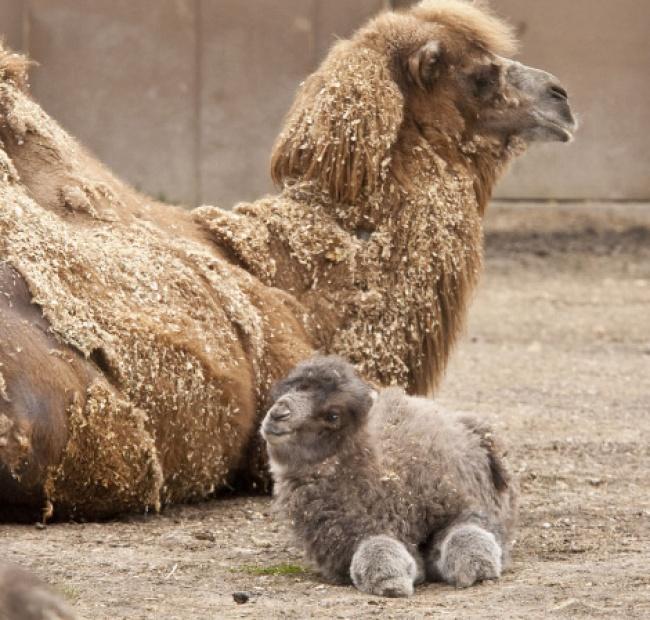 Pui simpatici de animale, in poze adorabile - Poza 9