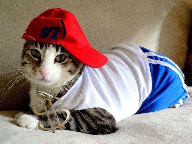 20+ Pisici costumate de Halloween, in poze hilare - Poza 5